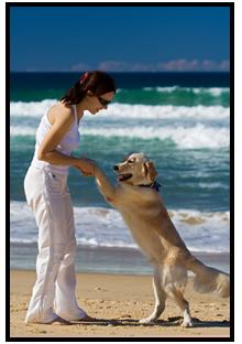 Urlaub mit Hund: Holland, Deutschland